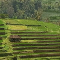 Jatiluwih Bali Tour