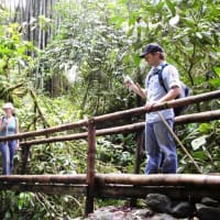 Practice your Jungle Survival Skills