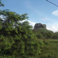 A Wonderful One Day tour in Sigiriya Rock