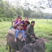 Jungle Safari at chitwan