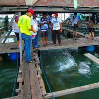 Visit to the Pulau Ketam Fishing Village
