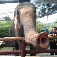Up Close And Personal With Elephants