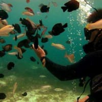 Under the Sea!! Fun Dive Cebu!