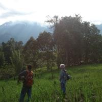 Jungle Survival Skill