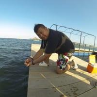 Swim With Shark