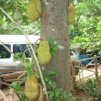 Sri Lanka private tour to Herbal Garden
