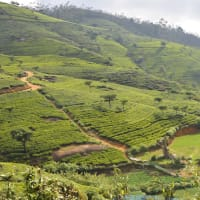 Sri Lanka Hill Country Tour (7 days)