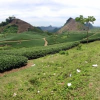MOC CHAU PLATEAU & GRASSLAND