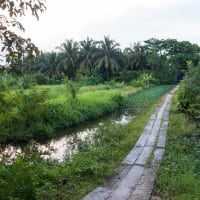 Cycling in the Green Lung of Bangkok