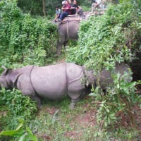 Jungle Safari at chitwan