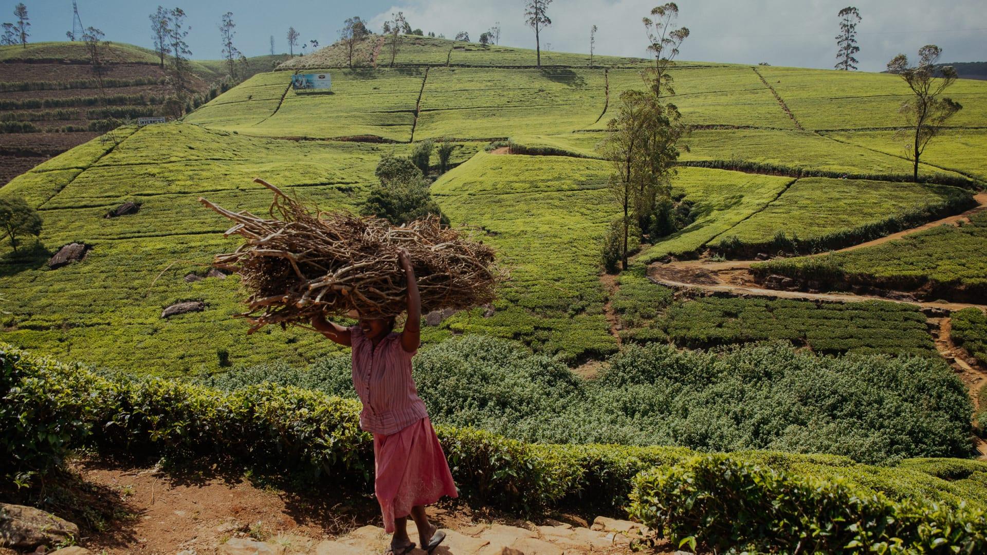 Jouw Persoonlijke Magisch Sri Lanka Tour 10 Dagen Colombo