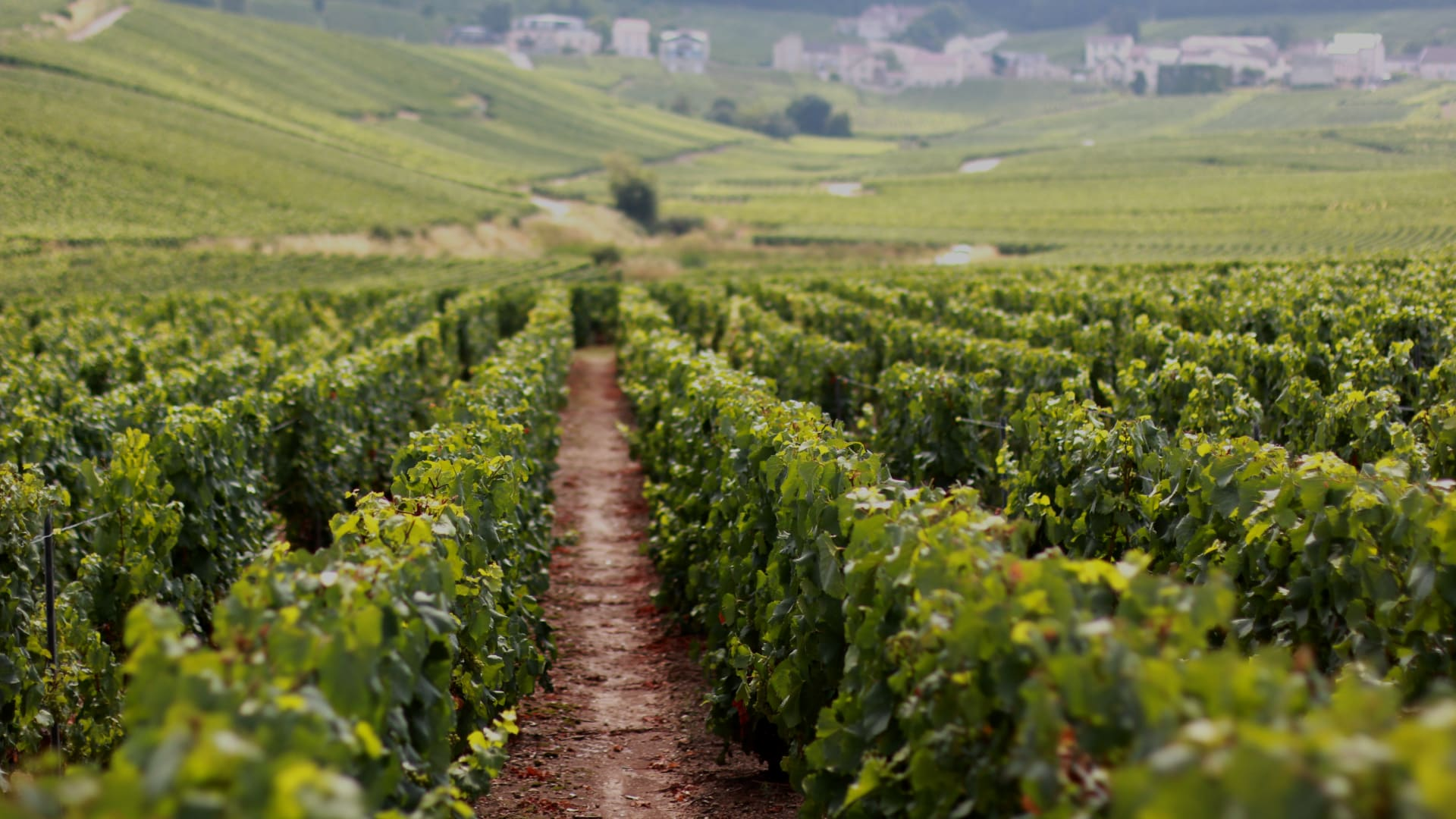 Vip Day Trip To Champagne With A Wine Expert Paris